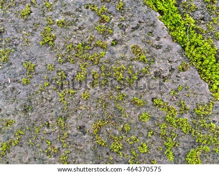 Fresh mossy floor texture closeup for background use