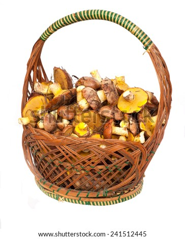 fresh mushrooms in basket - stock photo
