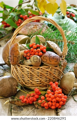 Fresh mushrooms in basket and ashberry branches on wooden table