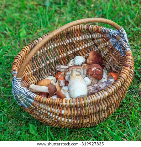 Fresh mushrooms in wicker basket on green grass.  Shallow depth of field
