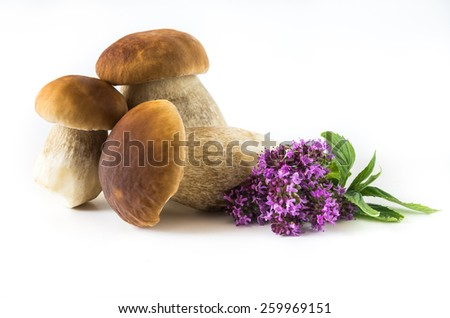 Fresh mushrooms on a white background, isolated, Boletus edulis - stock photo