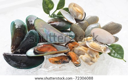 fresh mussel - stock photo