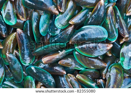 Fresh mussels at the market in Thaillnd - stock photo