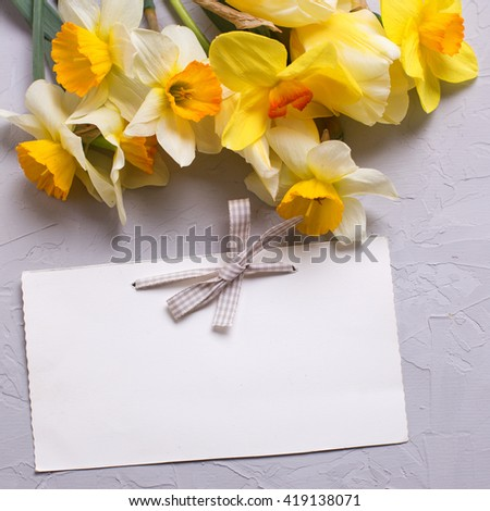 Fresh narcissus and tulips flowers and empty tag on grey textured background. Selective focus is on tag. Place for text. Square  image. - stock photo