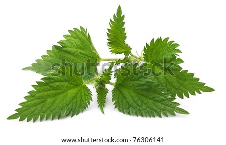 Fresh nettle on a white background