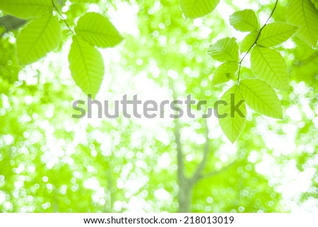 fresh new green leaves glowing in green forest - stock photo
