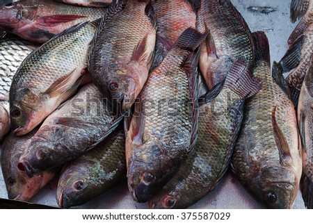 Fresh nile tilapia are on sale in the bazaar. - stock photo