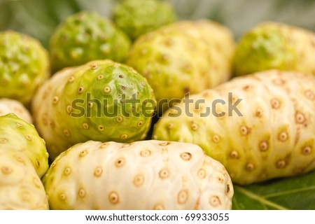 fresh noni fruit, it is herb for healing health - stock photo
