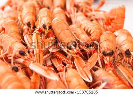 Fresh Norway lobsters close up. Soft focus. - stock photo