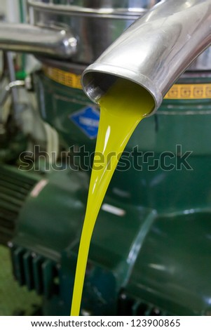 Fresh Olive oil pouring from machine.