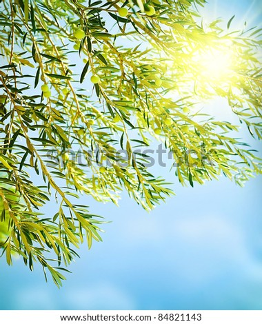 Fresh olive tree border, natural background of a ripe green olives, seasonal fruits and harvest concept - stock photo