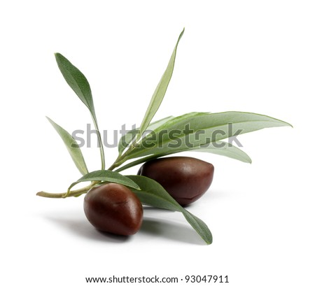 Fresh olive tree branch with olives isolated on white background - stock photo