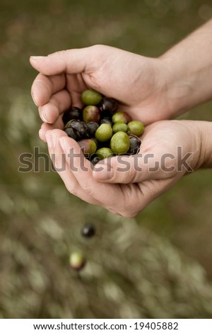 Fresh olives. Toned image. - stock photo