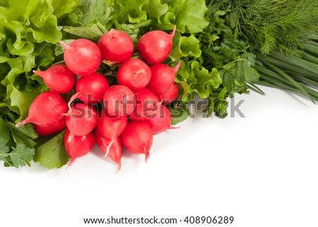 Fresh onion radish salad greens isolated on white background. - stock photo
