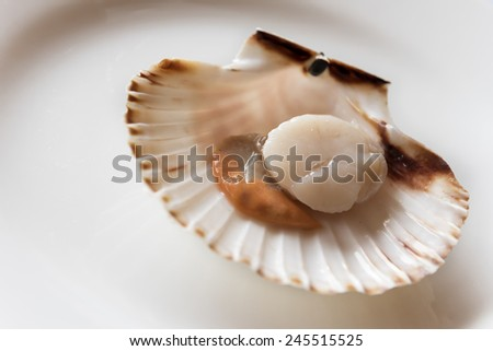 Fresh opened scallop on white dish - stock photo