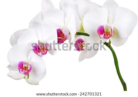 Fresh orchid flower, isolated on white background, DOF - stock photo