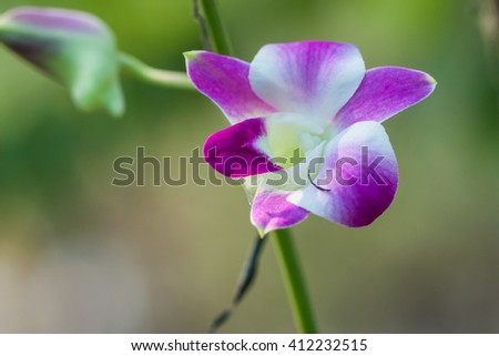 fresh orchid on natural background in garden