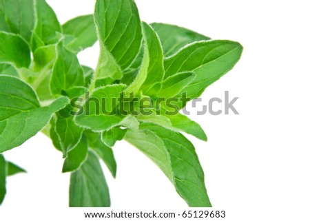 Fresh Oregano Leaves Isolated Over White - stock photo