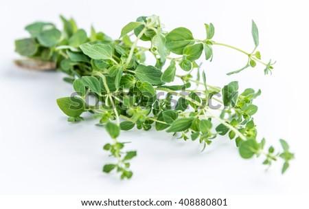 Fresh Oregano (selective focus; close-up shot) on white background - stock photo