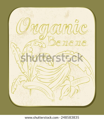 Fresh Organic Banana Label. Retro fruit design. Old paper texture background.  - stock photo