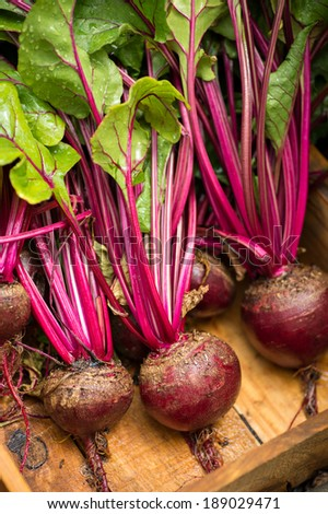 Fresh organic beets just picked from the garden shot in a wooden bin. The beets have been washed. - stock photo
