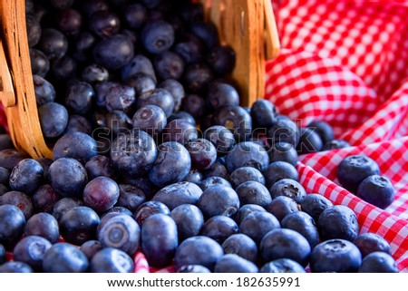 Fresh organic blueberries spilling out of wicker basket sitting on red gingham napkin