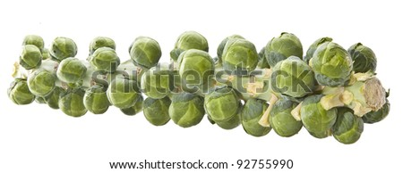 Fresh organic brussels sprout tree isolated on white - stock photo