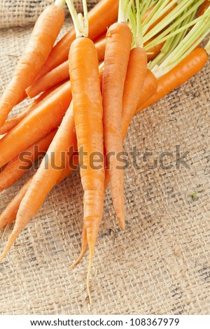 Fresh Organic Carrots against a back ground - stock photo