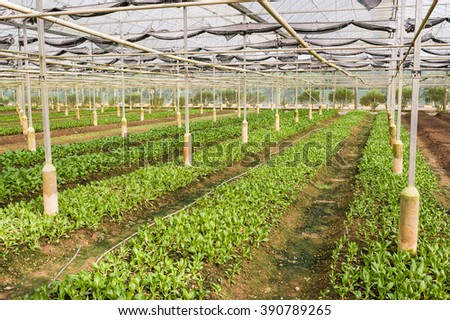 Fresh organic crops growing. Food and agriculture concepts. - stock photo