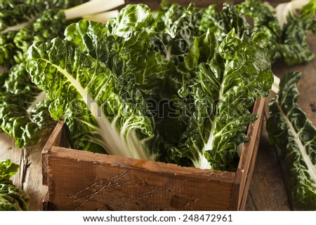 Fresh Organic Green Chard Ready to Eat - stock photo