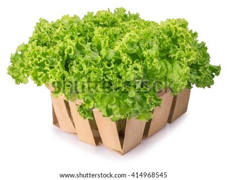 Fresh organic green lettuce in a basket isolated on white background. Vegetable salad lettuce - stock photo