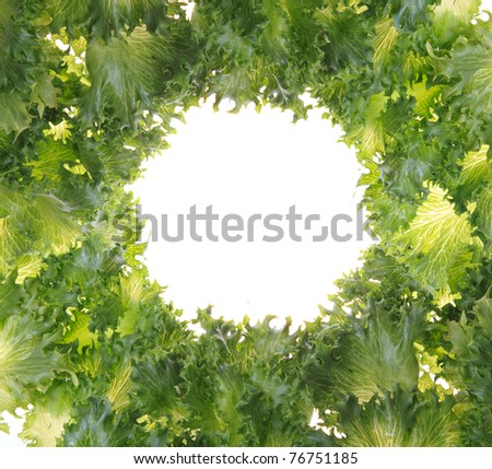 Fresh organic green vegetable leaf on white background for copy space