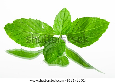 Fresh organic mint leaves on white background