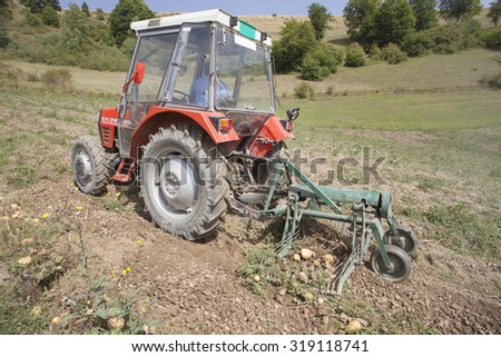 fresh organic potatoes in the field. working in potato field with tractor
