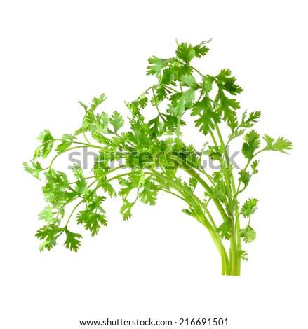 Fresh organic raw coriander leaf isolated on white background - stock photo