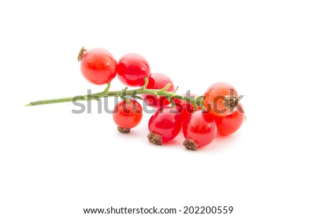 fresh organic red currants isolated on white background