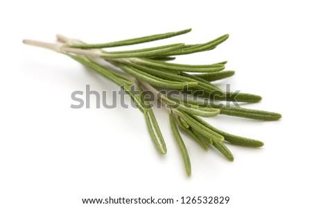 Fresh organic rosemary isolated on white background - stock photo