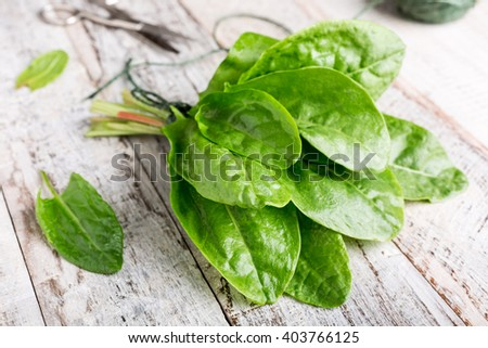 Fresh organic sorrel leaves on old white wooden background. Healthy food concept. - stock photo