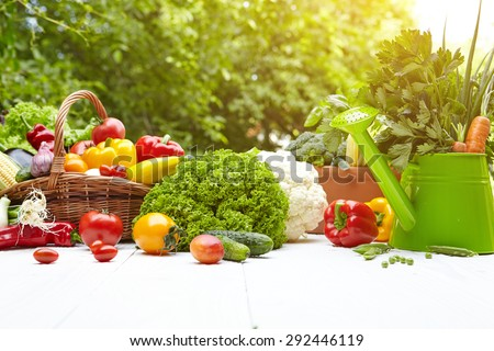 Fresh organic vegetables and fruits on wood table in the garden  - stock photo