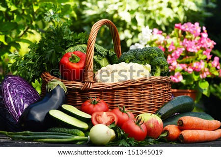Fresh organic vegetables in the garden - stock photo