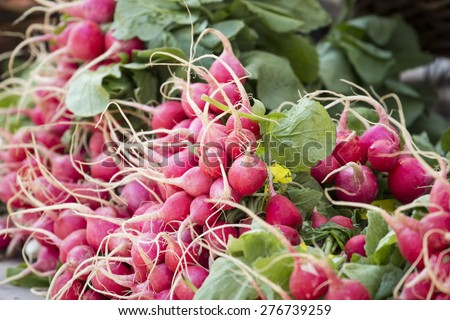 Fresh organic vegetables - Red baby radish bunch at a farmer's market