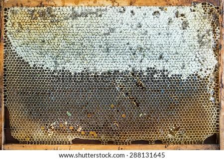 Fresh organic village honey in honeycombs, top view. Background - stock photo