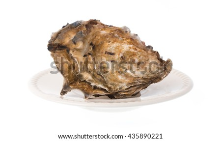 Fresh oyster on a dish isolated on white background - stock photo