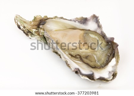 Fresh oyster trays on a white background. - stock photo