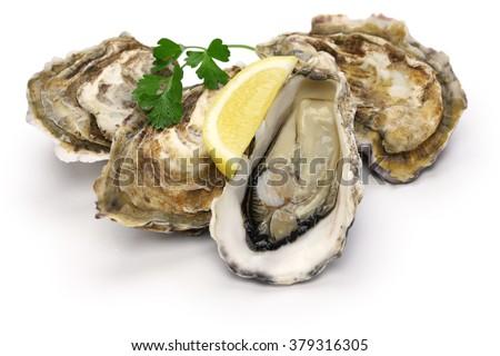 fresh oysters isolated on white background - stock photo
