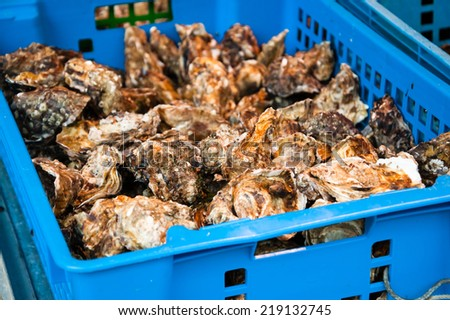 Fresh oysters on the stall outside fish store in Paris (France). - stock photo