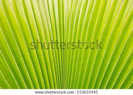 Fresh Palm leaf - stock photo