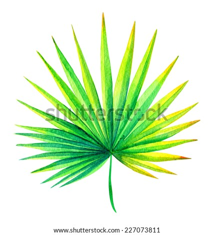fresh palm leaf watercolor drawing - stock photo