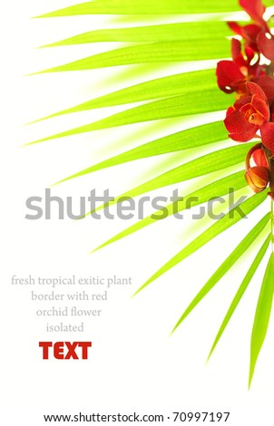 Fresh palm leaves with red orchid isolated on white background, spa floral border - stock photo