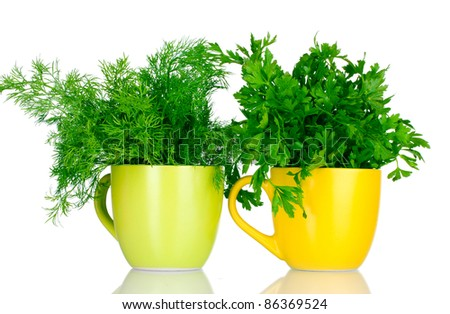 fresh parsley and dill in cups isolated on white - stock photo
